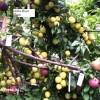 تولید درختی بدون نیاز به آب در شهرستان خاتم