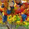 الهه انگور ایران | الههٔ انگور grapes Elahe Iran