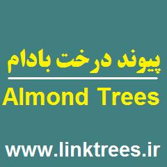 پیوند درخت بادام پیوند درختان روش های ازدیاد بادام Almond Tree