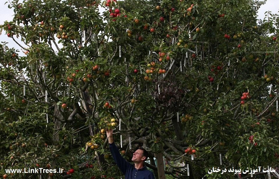 کانال تلگرام کلمه فارسی