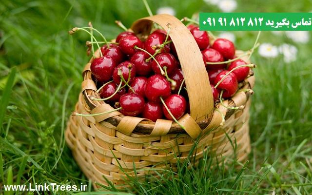 مقالات باغبانی| معرفی آشنایی پیوند زدن درخت گیلاس Sweet cherry | سایت آموزش پیوند درختان | www.LinkTrees.ir