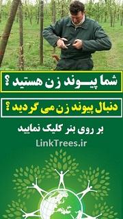 خدمات پیوند زنی درختان | شغل پیوند زن | پیوند زن ماهر درختان | سایت پیوند درخت services grafting links | آموزش پیوند زدن درختان میوه