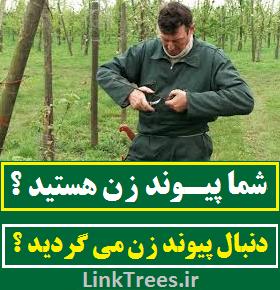خدمات پیوند زنی در استان و شهر و روستای شما services grafting links | سایت آموزش پیوند درختان | www.LinkTrees.ir | کارگاه آموزشی پیوند زدن درختان | کلاس پیوند درخت های میوه