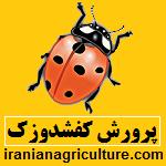 پرورش کفشدوزک هفت نقطه ای | کفش دوزک | کارگاه آموزشی تحقیقات و پرورش حشرات سوسک ها | سایت کشاورزی ایران www.iranianagriculture.com | seven spot ladybird
