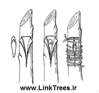 سایت آموزش پیوند درختان | www.LinkTrees.ir |مقالات کشاورزی و باغبانی | Grafting Grape Vines | فیلم آموزش پیوند زدن درختان | سی دی پیوند زنی