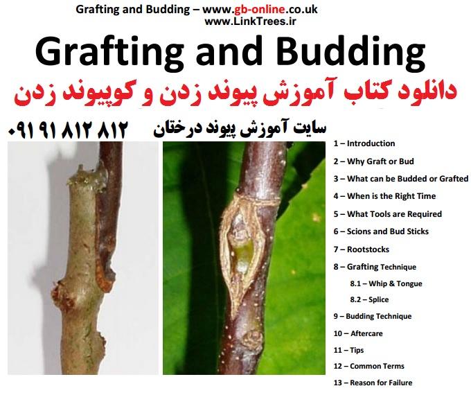 سایت آموزش پیوند درختان www.LinkTrees.ir | دانلود کتاب آموزش پیوند زدن و کوپیوند زدن Grafting Budding دانلود رایگان کتاب | ۲۸۱۲|۱۸۱|۰۹۱۹ | سایت دانلود کتاب های آموزشی کشاورزی و باغبانی پیوند زدن درختان میوه