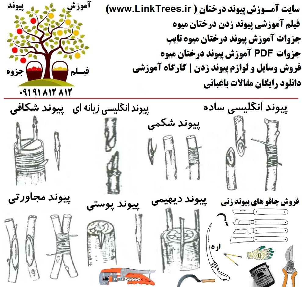 سایت آموزش پیوند درختان www.LinkTrees.ir آموزش پیوند زدن درختان میوه | tree grafting method | فیلم تکنیکهای پیوند زنی درختان | فیلم پیوند درخت | دانلود فیلم پیوند زدن درختان | grafting fruits tree pivand