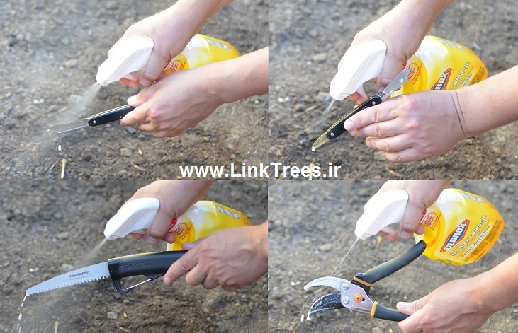 سایت آموزش پیوند درختان|www.LinkTrees.ir|آموزش پیوند زدن درختان میوه|استریل کردن ابزار پیوند درختان| ضد عفونی کردن ابزار پیوند