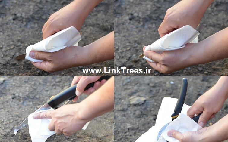 سایت آموزش پیوند درختان|www.LinkTrees.ir|آموزش پیوند زدن درختان میوه|استریل کردن ابزار پیوند درختان| ضد عفونی کردن ابزار پیوند|پاک کردن ابزار و لوازم