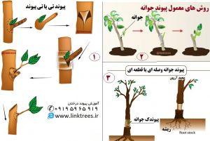 روشهای معمول پیوند جوانه ای | پیوند جوانه | سایت آموزش پیوند درختان www.LinkTrees.ir