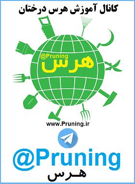 تلگرام کشاورزی |تلگرام باغبانی | عضویت در کانال تلگرام سایت آموزش هرس درختان telegrams pruning fruit tree