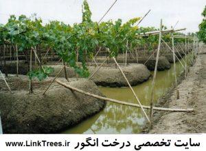 سایت آموزش پیوند درختان ( www.LinkTrees.ir) : سایت تخصصی درخت انگور : کودهای مورد نیاز انگور