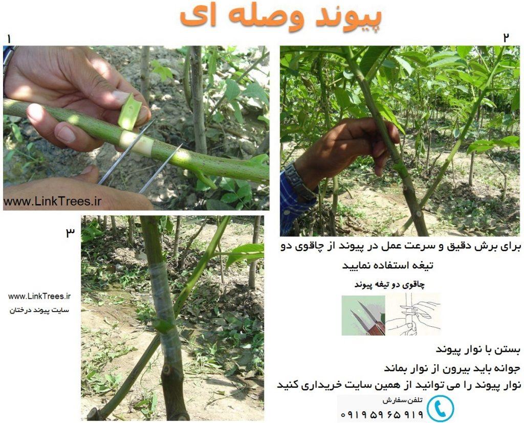 سایت آموزش پیوند درختان ( www.LinkTrees.ir) : آموزش روشهای پیوند زنی - آموزش پیوند زدن درختان : بهترین زمان پیوند وصله ای | نوار پیوند | چاقوی دو تیغه | پیوند لوله گردو