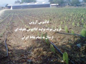 amount-harvest-cactus-forage-per-hectare-square--feed-cactus-Arvin-buy