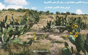 opuntia-ficus-indica-nopal-paddle-cactus-standard-tpf-arvin-buy-sales-shop