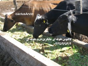 use-of-cactus-as-forage-for-dairy-cows-semi-arid-regions-iran-ilam-boshehr-kerman-arvin