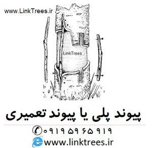 سایت آموزش پیوند درختان ( www.LinkTrees.ir) آموزش پیوند پلی با تصویر : آموزش روشهای پیوند زنی - آموزش پیوند زدن درختان آموزش پیوند پلی با تصویر